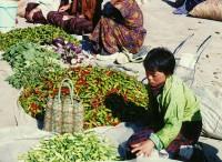 bhutanchilis