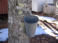 800px-Maple_syrup_bucket