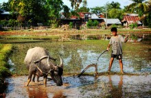 Child with water buffalo. Photo by Paulrudd.