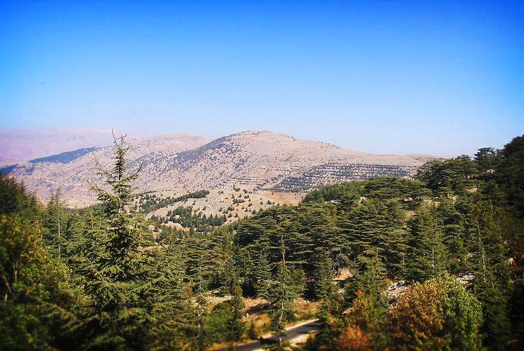 Al Shouf Cedar Nature Reserve. Photo by Yhabbouche.