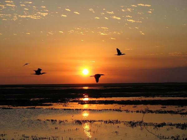 Sunset in Llanos, Venezuela. Photo by Anagoria.