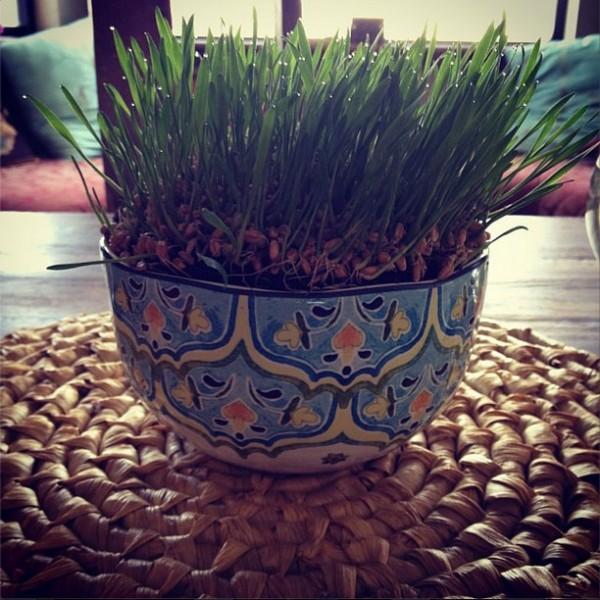 nowruz-haftseen-wheat-germ